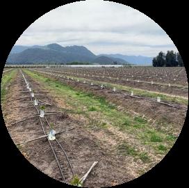 Análisis Agroclimático Cerezos
